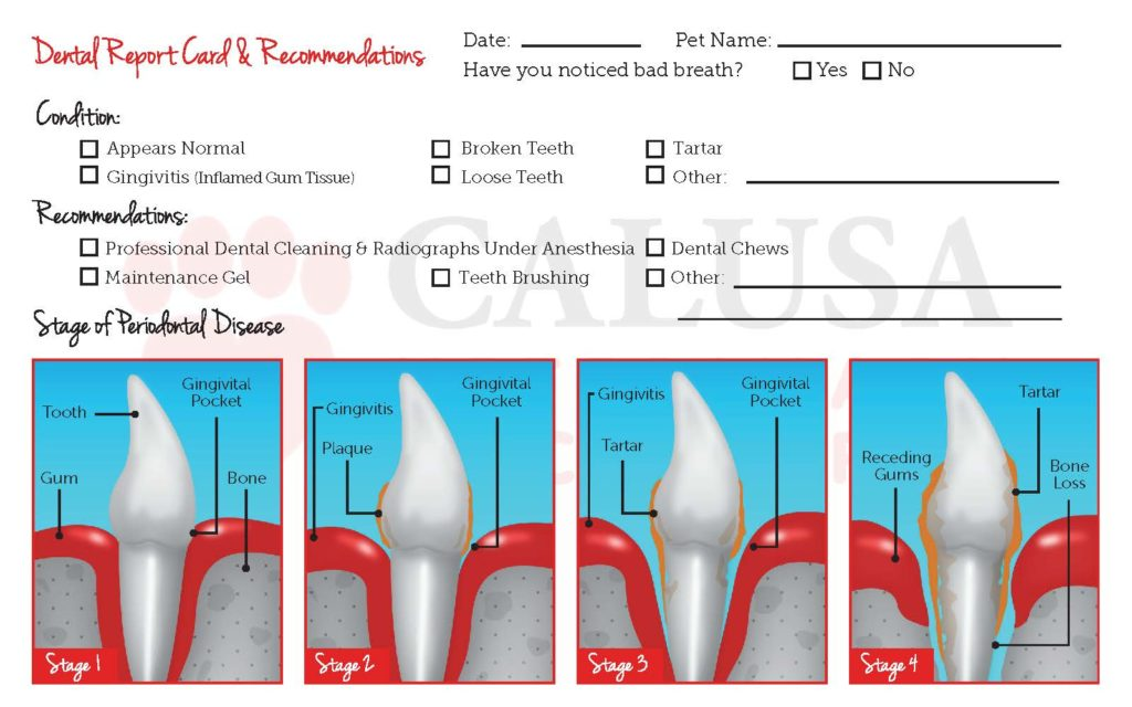 Sample dental card our marketing team can assist with creating for your hospital.