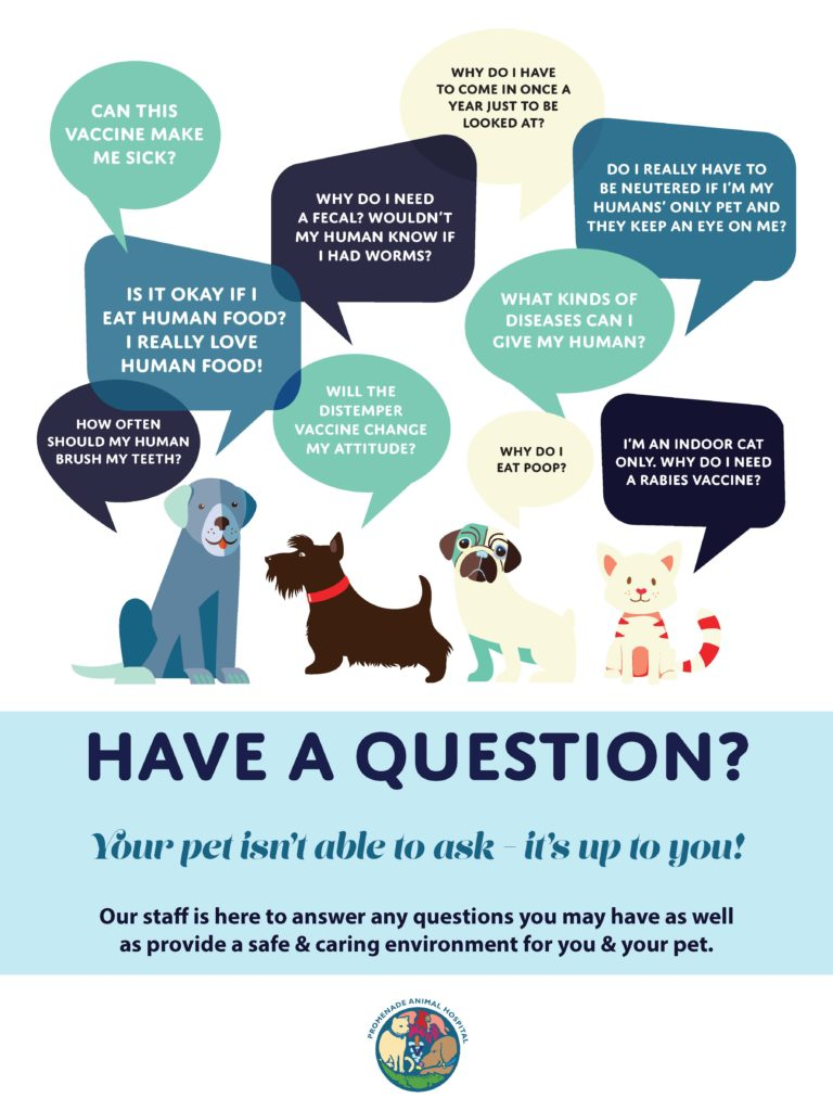 We will help market your veterinary practice.