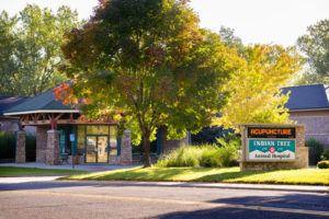 Indian Tree Animal Hospital in Arvada, CO